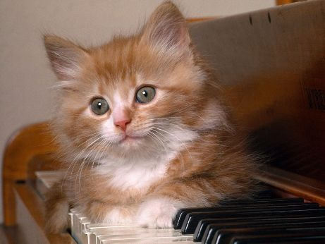 Kitten And Keys 2